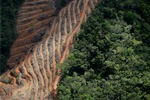Deforestation for oil palm -- sabah_1146