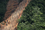 Deforestation for oil palm -- sabah_1147