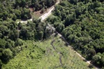Deforestation for oil palm -- sabah_1150