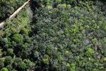 Oil palm plantation -- sabah_1153