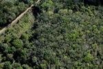 Oil palm plantation -- sabah_1154