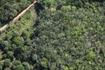 Oil palm plantation -- sabah_1155