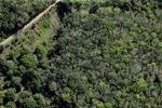 Oil palm plantation -- sabah_1156