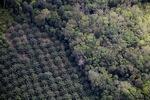 Oil palm plantation -- sabah_1158
