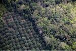 Oil palm plantation -- sabah_1159