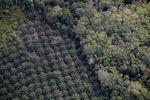 Oil palm plantation -- sabah_1160