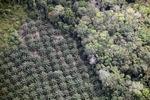 Oil palm plantation -- sabah_1161