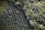 Oil palm plantation -- sabah_1162