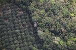 Oil palm plantation -- sabah_1163