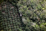 Oil palm plantation -- sabah_1164