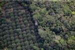 Oil palm plantation -- sabah_1165