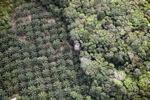 Oil palm plantation -- sabah_1166