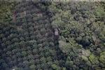 Oil palm plantation -- sabah_1167