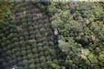 Oil palm plantation -- sabah_1168