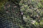 Oil palm plantation -- sabah_1169