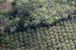 Oil palm plantation -- sabah_1170