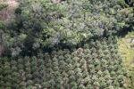Oil palm plantation -- sabah_1171
