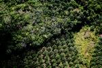 Oil palm plantation -- sabah_1173