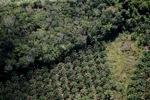 Oil palm plantation -- sabah_1174
