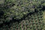 Oil palm plantation -- sabah_1175
