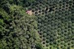 Oil palm plantation -- sabah_1176