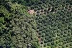 Oil palm plantation -- sabah_1177