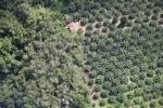 Oil palm plantation -- sabah_1178