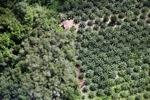 Oil palm plantation -- sabah_1180