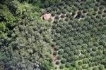 Oil palm plantation -- sabah_1181
