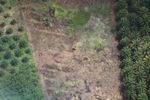 Oil palm plantation -- sabah_1183