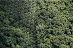 Oil palm plantation -- sabah_1184
