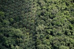 Oil palm plantation -- sabah_1185