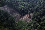 Deforestation for oil palm -- sabah_1188