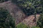 Deforestation for oil palm -- sabah_1192