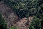 Deforestation for oil palm -- sabah_1193
