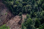Deforestation for oil palm -- sabah_1194