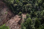 Deforestation for oil palm -- sabah_1195