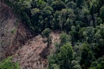 Deforestation for oil palm -- sabah_1196