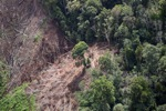 Deforestation for oil palm -- sabah_1201