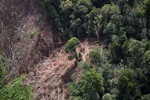 Deforestation for oil palm -- sabah_1202
