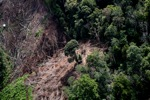 Deforestation for oil palm -- sabah_1203
