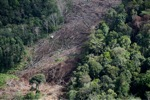 Deforestation for oil palm -- sabah_1205