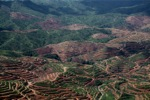 Deforestation for oil palm -- sabah_1211