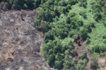 Deforestation for oil palm -- sabah_1216