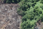 Deforestation for oil palm -- sabah_1217