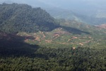 Deforestation for oil palm -- sabah_1222