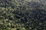 Borneo rainforest -- sabah_1225