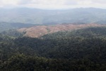 Deforestation for oil palm -- sabah_1226