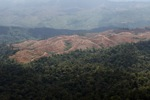 Deforestation for oil palm -- sabah_1229