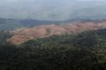 Deforestation for oil palm -- sabah_1229